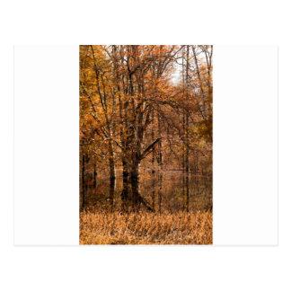 Fall Swamp Landscape Postcard