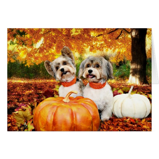 Fall Thanksgiving - Max & Leo - Yorkies Card