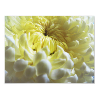 Fall-Themed Photo Print - Chrysanthemum Closeup