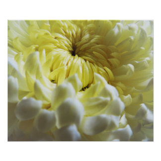 Fall-Themed Poster - Chrysanthemum Closeup