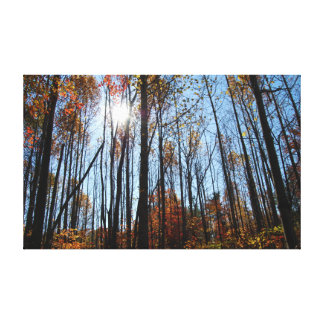 Fall Trees Gallery Wrapped Canvas