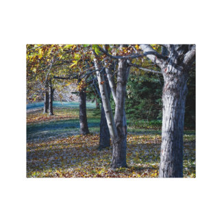 Fall trees Ontario Canvas Print