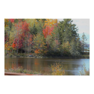 Fall Trees Photo Poster