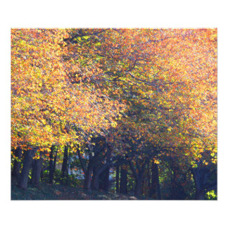 Fall trees photo print