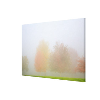 Fall trees shrouded in mist canvas print