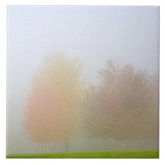 Fall trees shrouded in mist tile