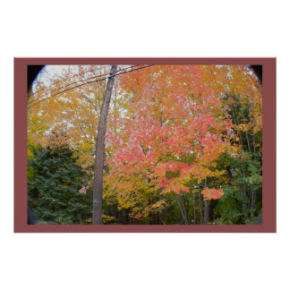 Fall Trees Wide Angle Photo Poster