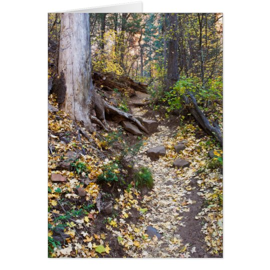 Fall upon the West Fork trail Card