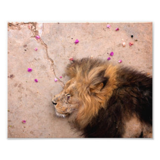 Fallen King Photographic Print
