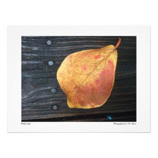 Fallen Leaf Photo
