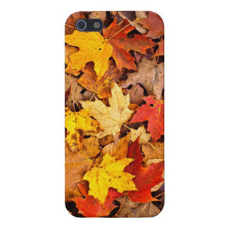 Fallen leaves in autumn iPhone 5/5S cover