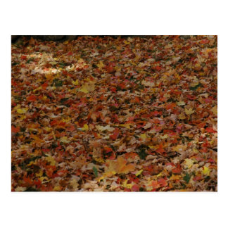 Fallen Leaves Postcard
