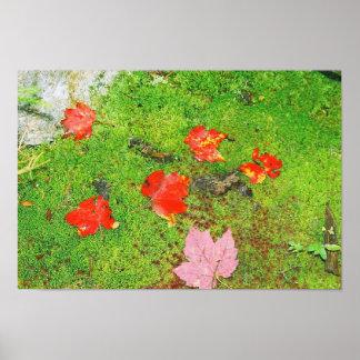 Fallen Maple Leaves Print