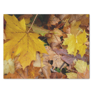 Fallen Maple Leaves Yellow Autumn Nature Tissue Paper