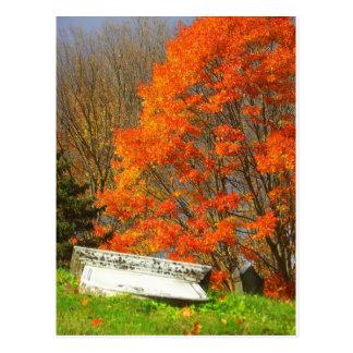 Fallen Postcard