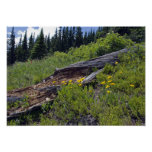 Fallen Tree and Wildflowers Poster Print