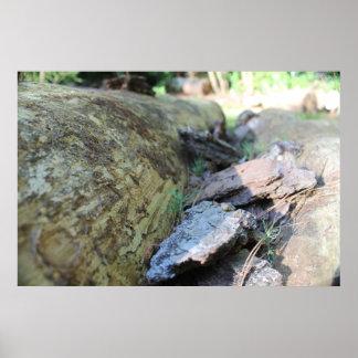 Fallen tree photo print