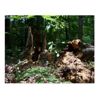 Fallen Tree PostCard