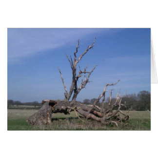 Fallen tree still reaches for the sky, Sussex Card