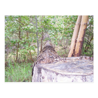 Fallen Tree with Stump in Forest Postcard