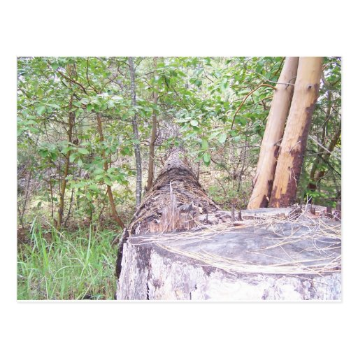 Fallen Tree with Stump in Forest Postcards