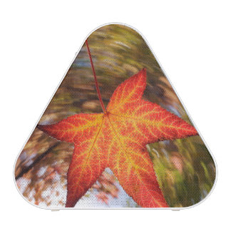 Falling Leaf from a tree in autumn