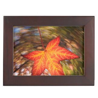 Falling Leaf from a tree in autumn Memory Box