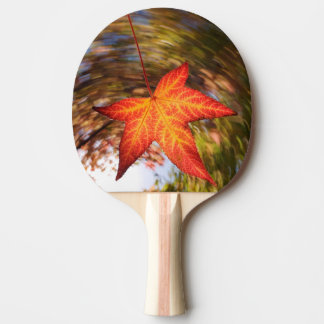 Falling Leaf from a tree in autumn Ping Pong Paddle