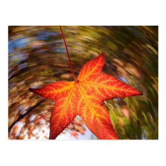 Falling Leaf from a tree in autumn Postcard