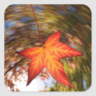 Falling Leaf from a tree in autumn Square Sticker