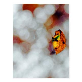 falling leaf postcard