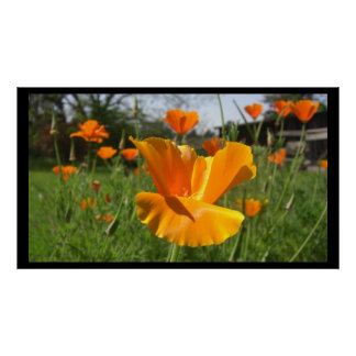 Falling Poppy Large Posters Prints