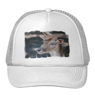 Fallow Deer Baseball Hat