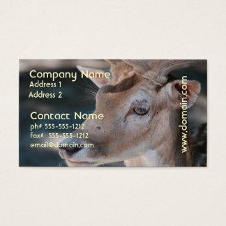 Fallow Deer Business Card