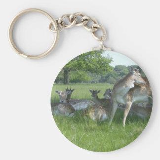 Fallow Deer Key Ring