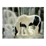falls,horse,river,beautiful view postcard
