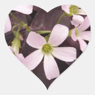False Shamrock Oxalis Triangularis Heart Sticker