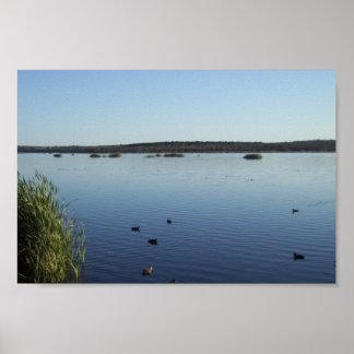 Families Of Ducks Swimming In The Lake Of Joondalu Posters