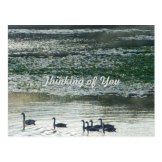 Family of Canada Geese Thinking of You Postcard