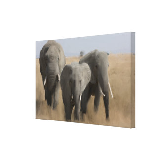 Family of Elephants Canvas Print