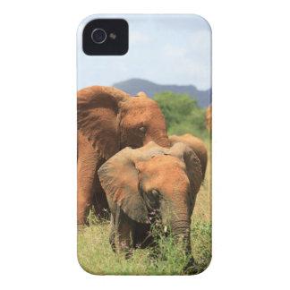 Family of Elephants, Kenya Case-Mate iPhone 4 Case