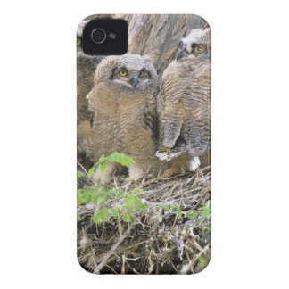 Family of Great Horned Owlets (Bubo virginianus) iPhone 4 Covers