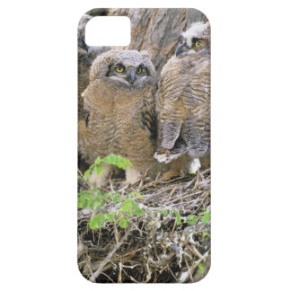 Family of Great Horned Owlets (Bubo virginianus) iPhone 5 Cover
