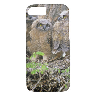 Family of Great Horned Owlets (Bubo virginianus) iPhone 8/7 Case