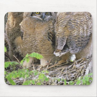 Family of Great Horned Owlets (Bubo virginianus) Mouse Mat