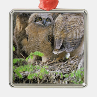 Family of Great Horned Owlets (Bubo virginianus) Silver-Colored Square Decoration