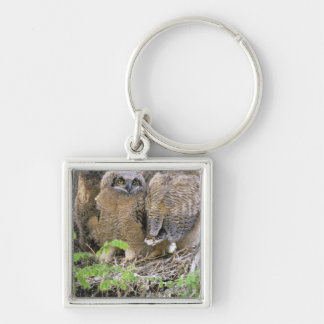 Family of Great Horned Owlets (Bubo virginianus) Silver-Colored Square Key Ring