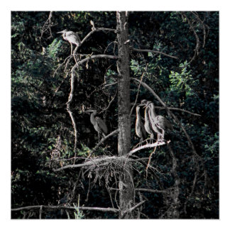 Family of Herons... Poster
