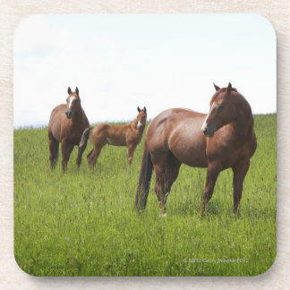 Family of horse in field coaster
