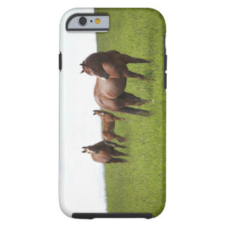 Family of horse in field tough iPhone 6 case